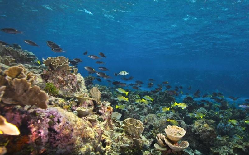 bolshoybaryernirif 1 Исчезающие красоты Большого Барьерного рифа