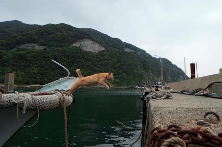 catsheaven 10 Кошачий рай на японском острове