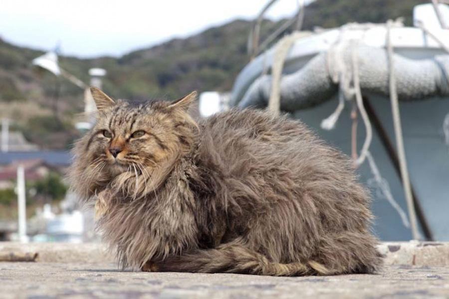 catsheaven 11 Кошачий рай на японском острове