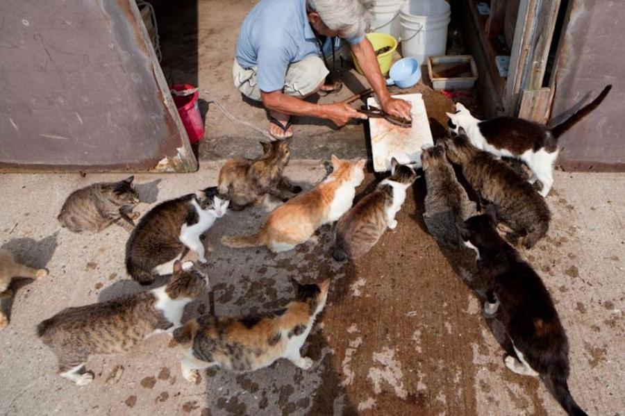 catsheaven 13 Кошачий рай на японском острове