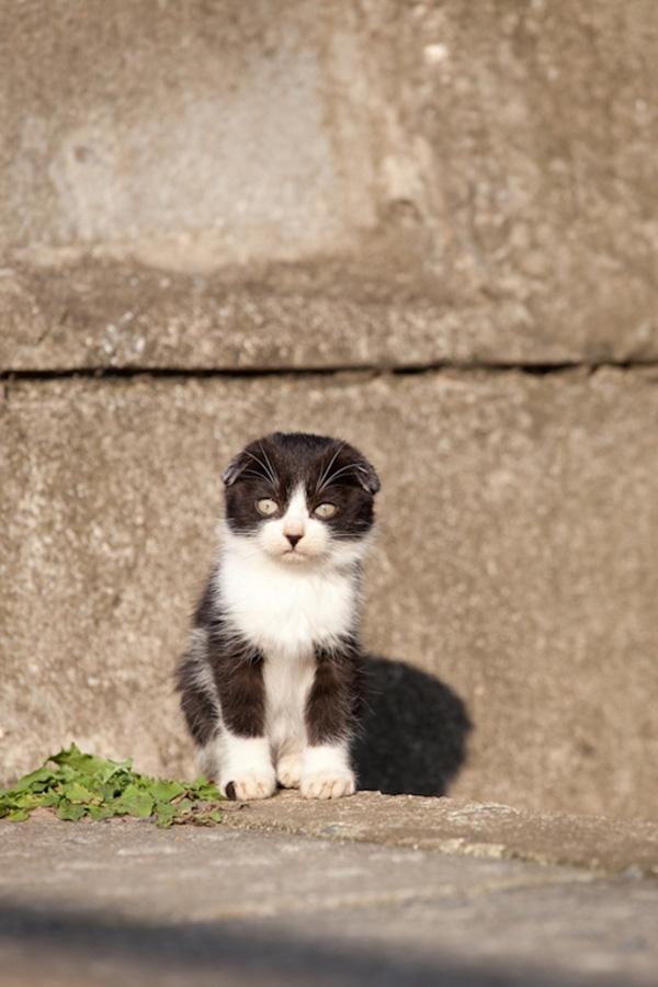 catsheaven 15 Кошачий рай на японском острове