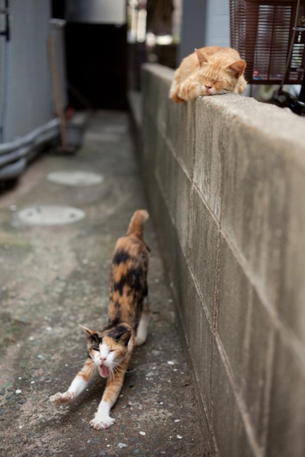 catsheaven 16 Кошачий рай на японском острове