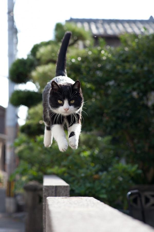 catsheaven 17 Кошачий рай на японском острове