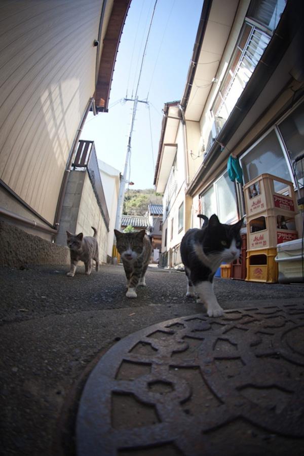 catsheaven 19 Кошачий рай на японском острове