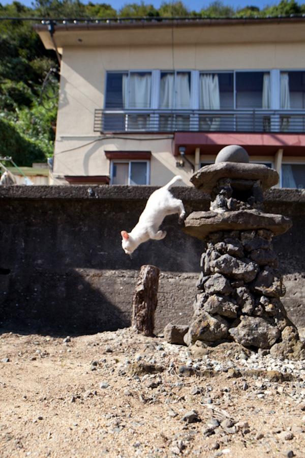 catsheaven 22 Кошачий рай на японском острове