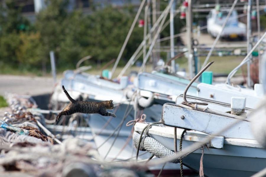 catsheaven 24 Кошачий рай на японском острове