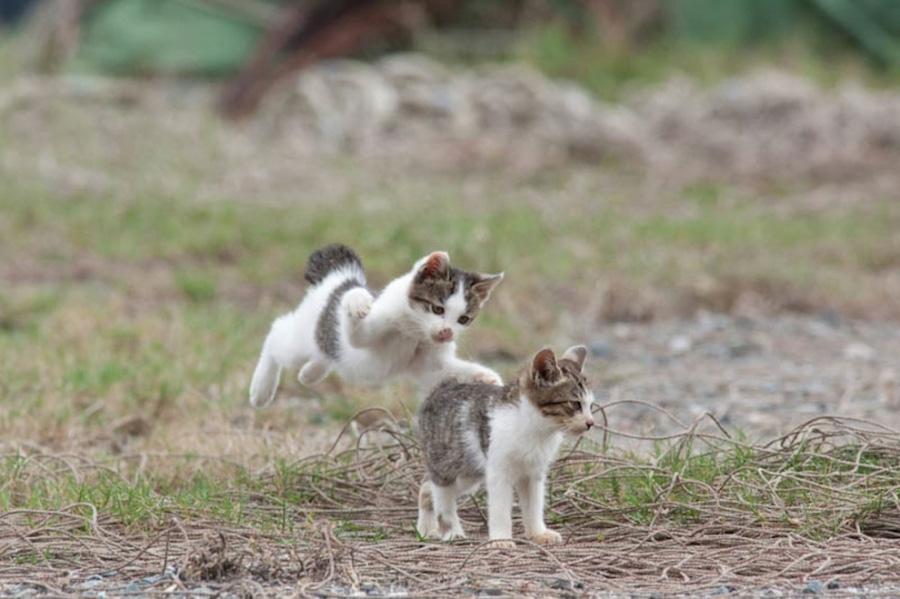 catsheaven 25 Кошачий рай на японском острове