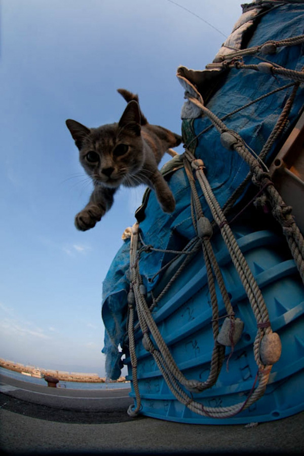 catsheaven 28 Кошачий рай на японском острове