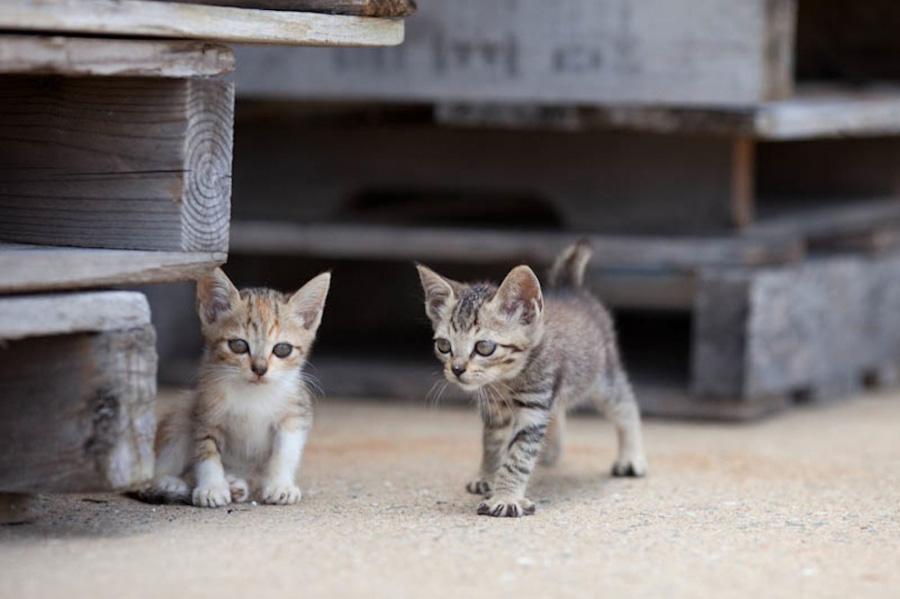 catsheaven 29 Кошачий рай на японском острове