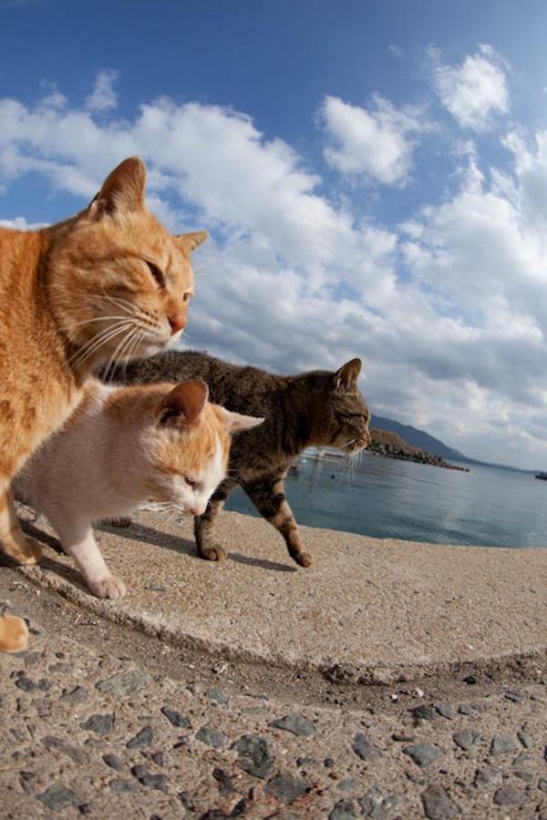 catsheaven 37 Кошачий рай на японском острове