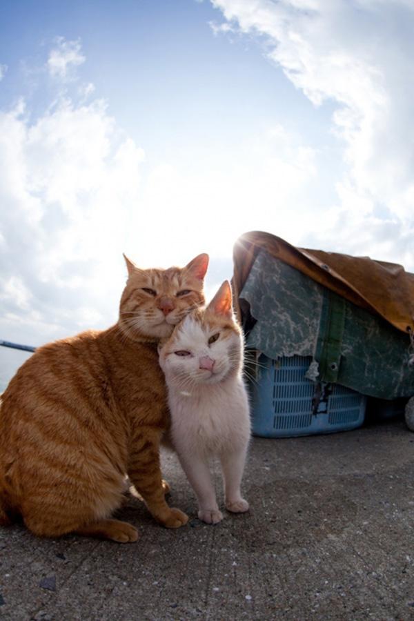 catsheaven 38 Кошачий рай на японском острове