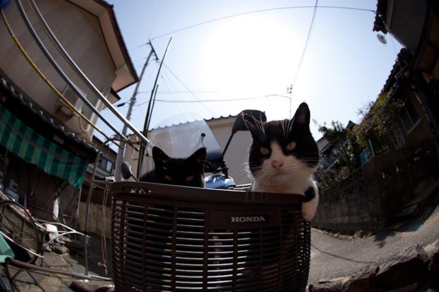 catsheaven 41 Кошачий рай на японском острове