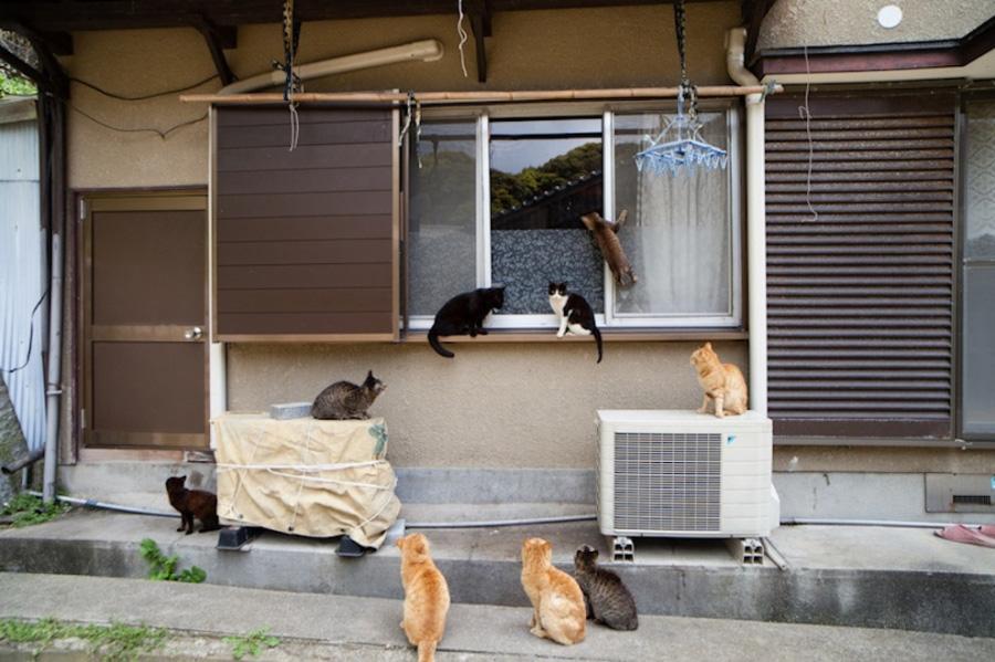 catsheaven 45 Кошачий рай на японском острове