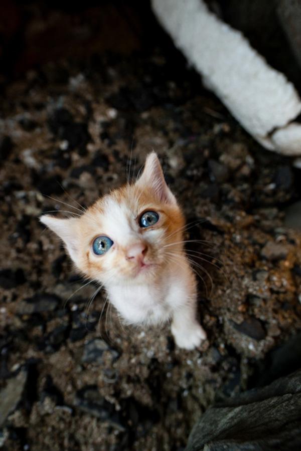 catsheaven 46 Кошачий рай на японском острове