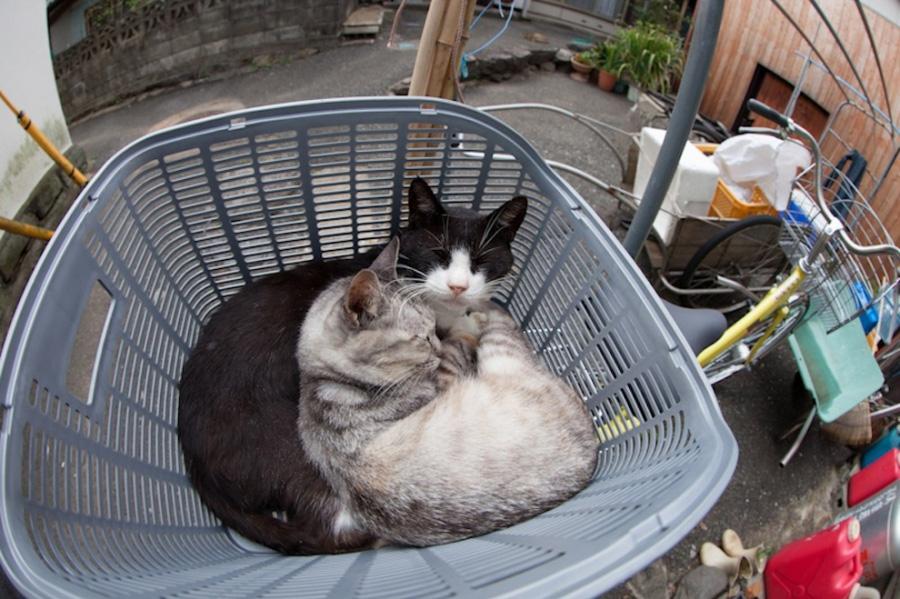 catsheaven 47 Кошачий рай на японском острове