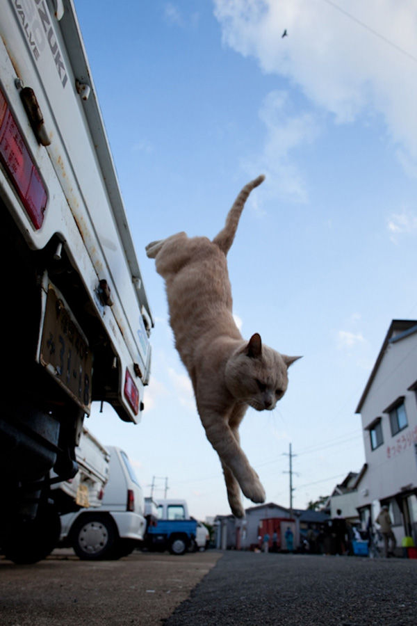 catsheaven 48 Кошачий рай на японском острове