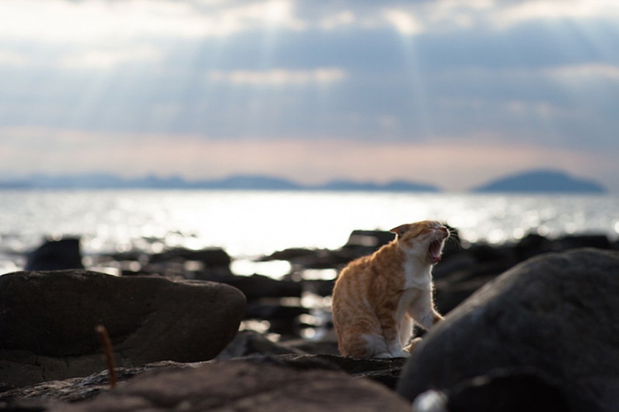 catsheaven 49 Кошачий рай на японском острове
