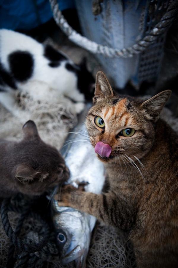 catsheaven 5 Кошачий рай на японском острове
