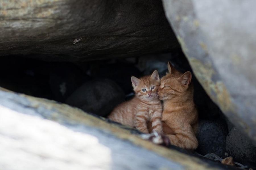 catsheaven 6 Кошачий рай на японском острове