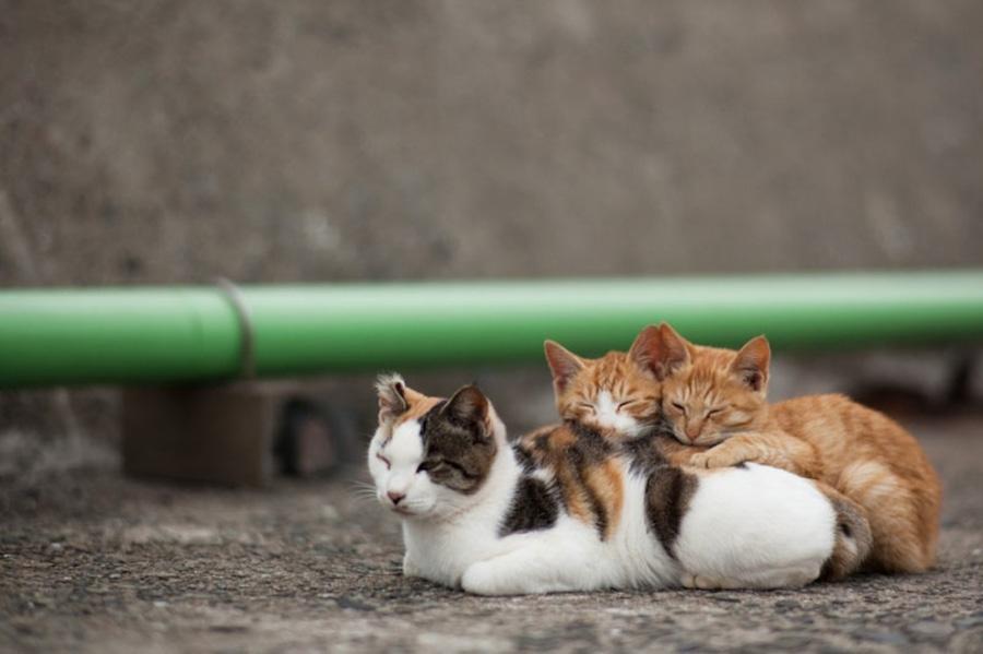 catsheaven 7 Кошачий рай на японском острове