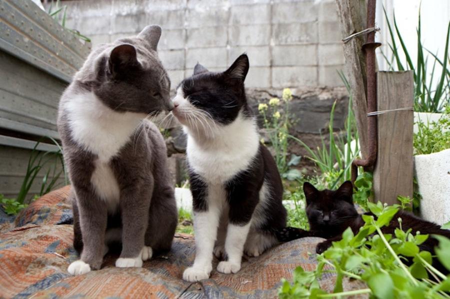 catsheaven 8 Кошачий рай на японском острове