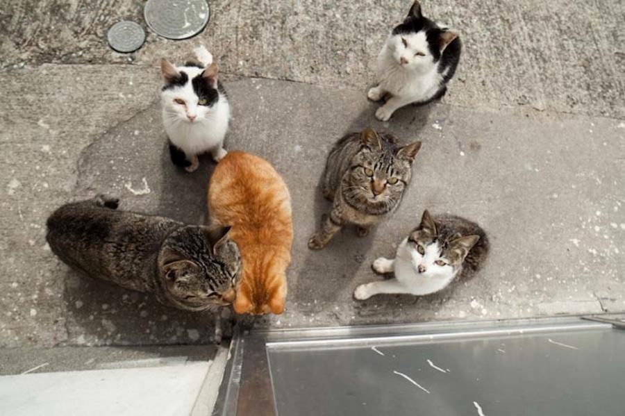 catsheaven 9 Кошачий рай на японском острове