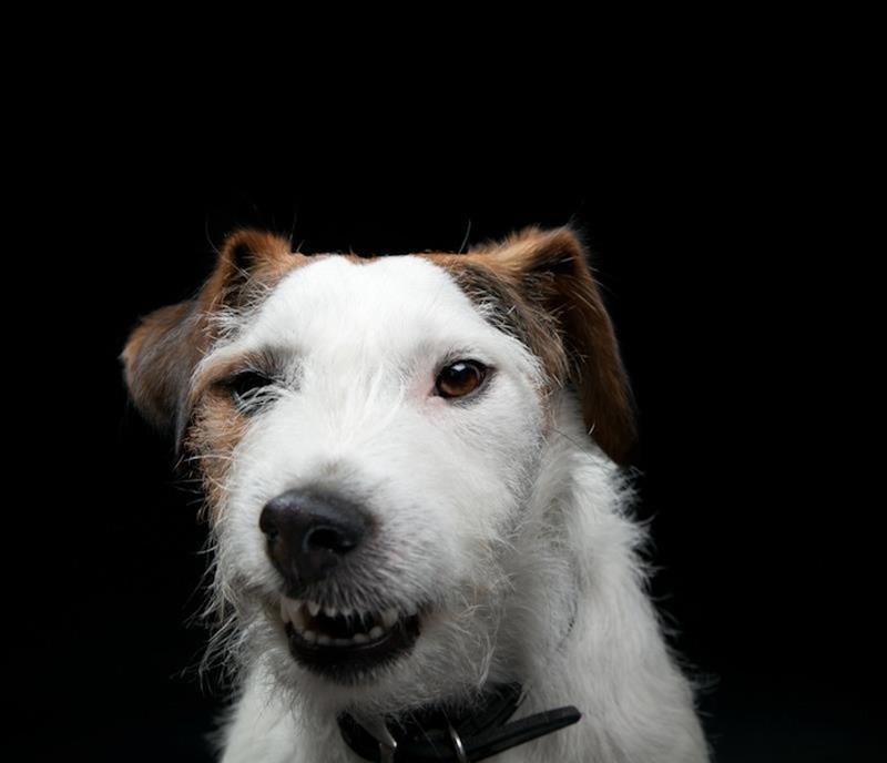 dogsportraits 1 Собачьи портреты от Жерарда Чарльза Гетингса