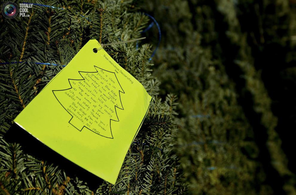 furtree18 Как готовят рождественские елки в Америке