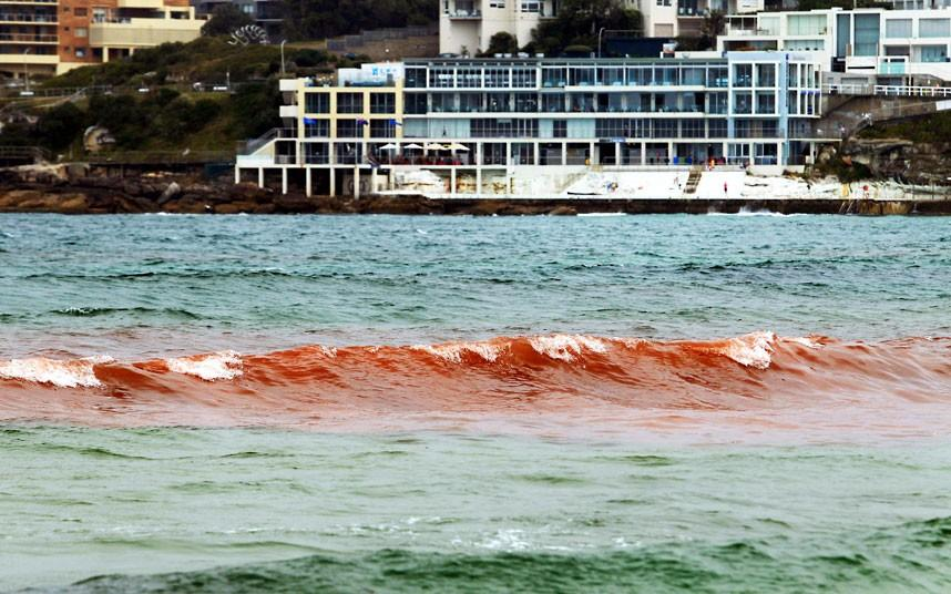 krovavoaliokean 10 Вода напляжах Австралии окрасилась кроваво красным, напугав отдыхающих