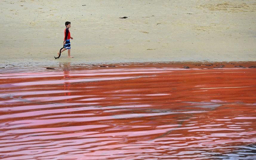krovavoaliokean 2 Вода напляжах Австралии окрасилась кроваво красным, напугав отдыхающих
