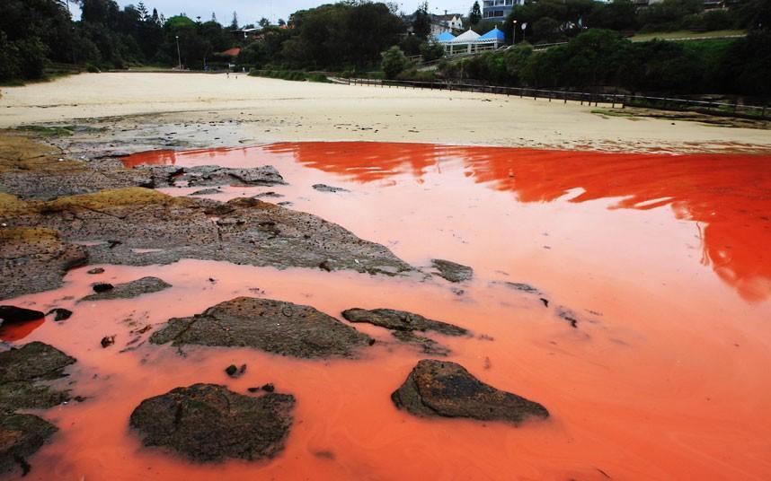 krovavoaliokean 6 Вода напляжах Австралии окрасилась кроваво красным, напугав отдыхающих