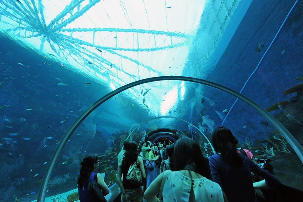 marine01 В Сингапуре открывается самый большой в мире океанариум