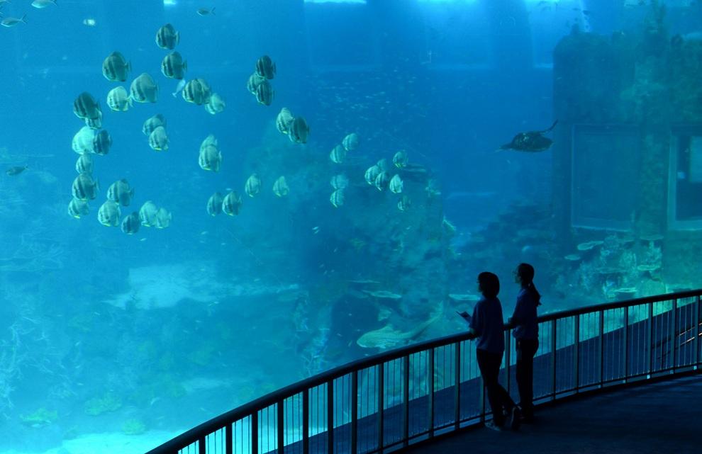 marine02 В Сингапуре открывается самый большой в мире океанариум