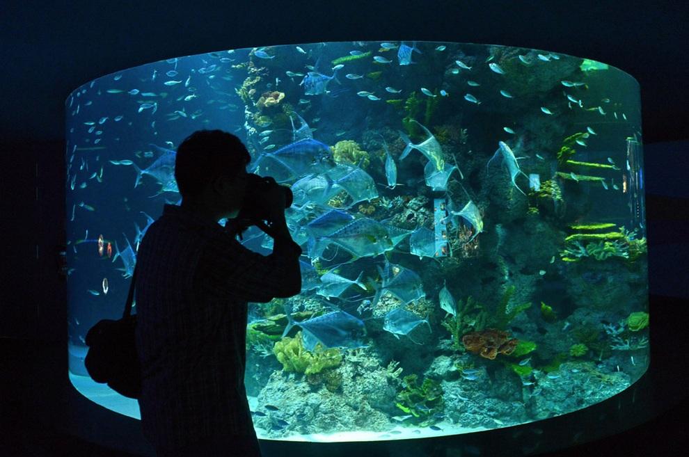 marine03 В Сингапуре открывается самый большой в мире океанариум