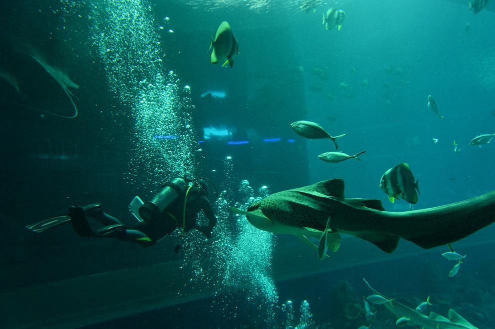 marine04 В Сингапуре открывается самый большой в мире океанариум