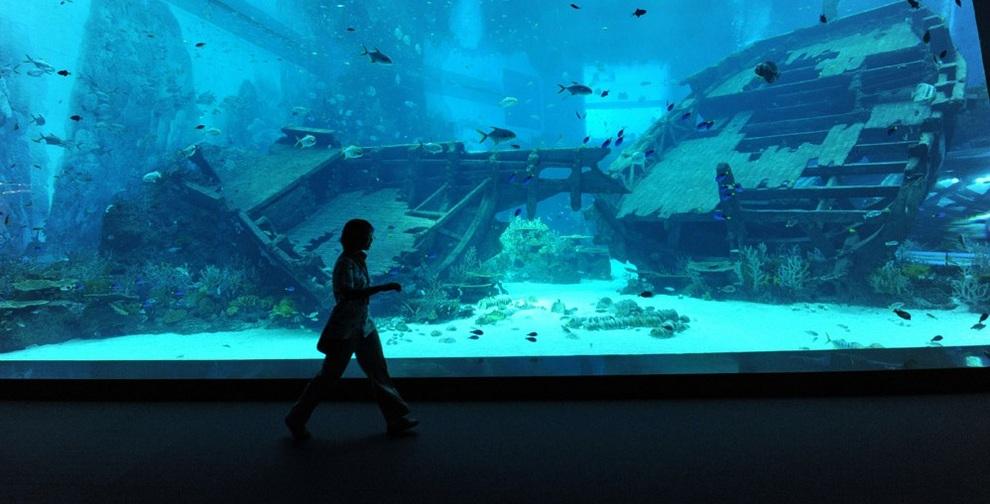 marine05 В Сингапуре открывается самый большой в мире океанариум