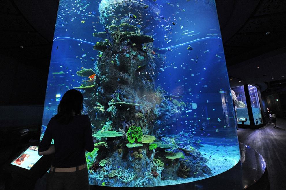 marine06 В Сингапуре открывается самый большой в мире океанариум