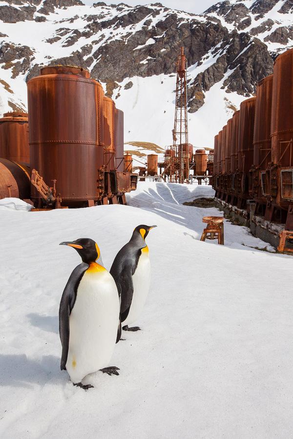 penguins 1 Страждующим пингвинов посвящается