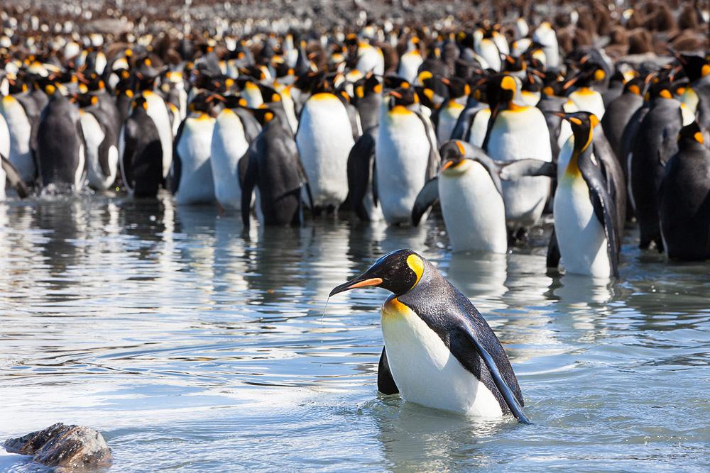 Все про пингвинов картинки моих
