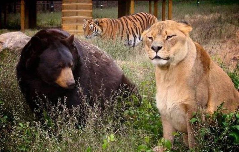 http://bigpicture.ru/wp-content/uploads/2012/11/unbelievablefriendship-3.jpg