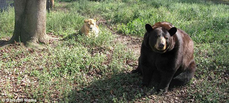 http://bigpicture.ru/wp-content/uploads/2012/11/unbelievablefriendship-5.jpg