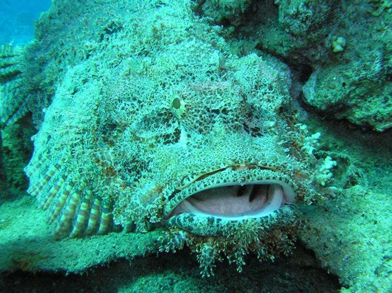 yadovitiejivotnie 13 Топ 10 самых ядовитых животных на планете