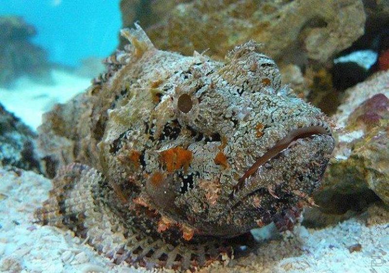 yadovitiejivotnie 14 Топ 10 самых ядовитых животных на планете