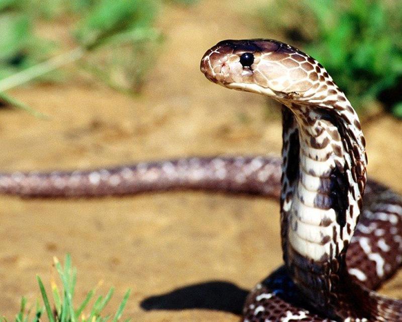 yadovitiejivotnie 3 Топ 10 самых ядовитых животных на планете