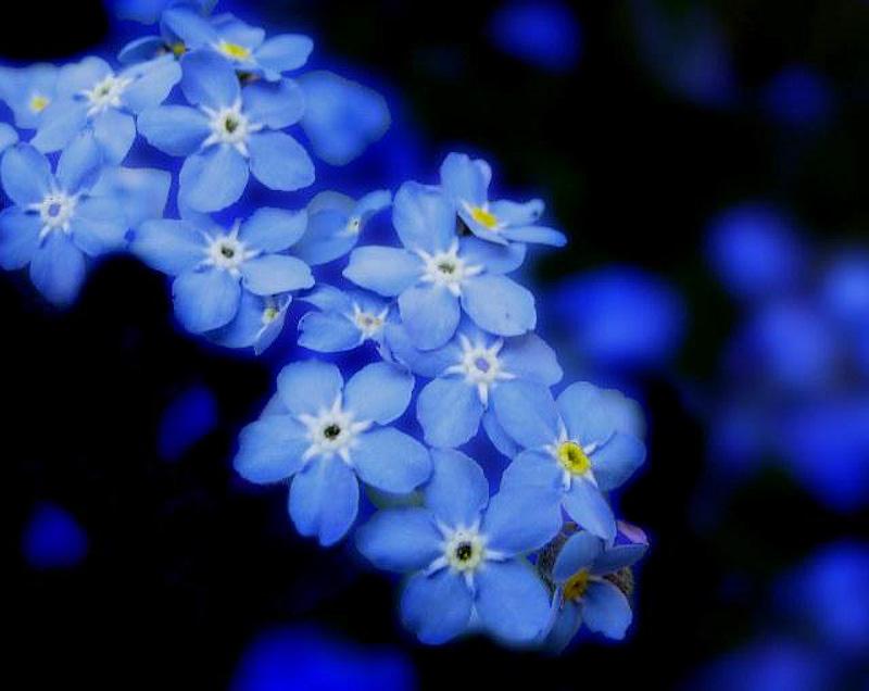 058 10 фактов о цвете