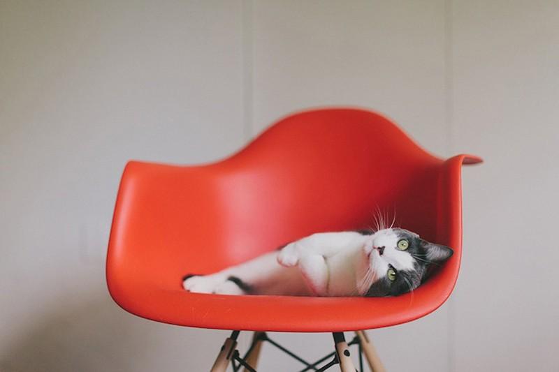 Cats Love Eames 1 800x533 Кошки любят дизайнерскую мебель