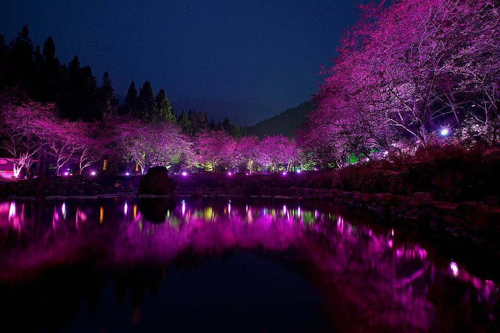 Cherry Blossom 2 Вишневый цвет