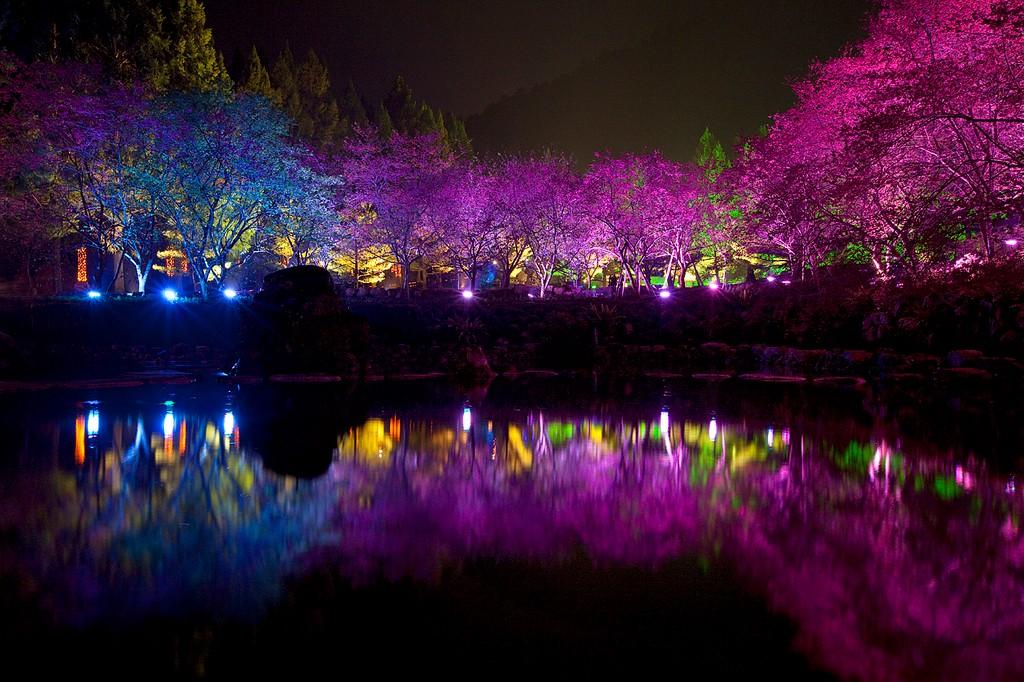 Cherry Blossom 4 Вишневый цвет