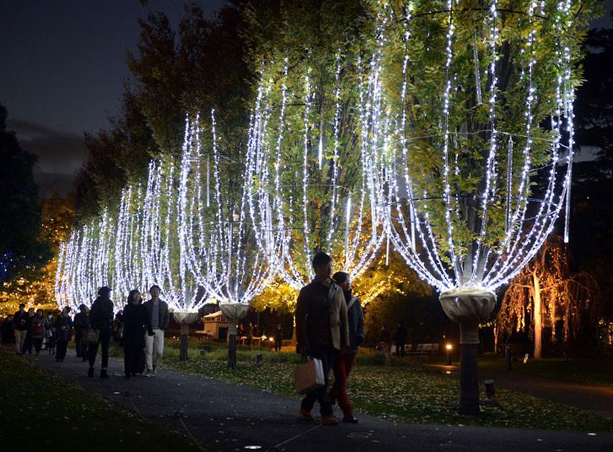 Christmas trees and lights 17 Ёлки и праздничные огни по всему миру