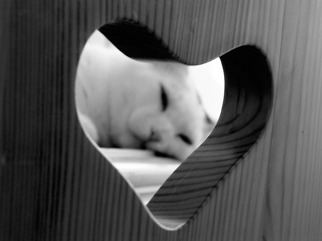 Heart 25 Ко дню Святого Валентина: Сердца, всюду сердца!